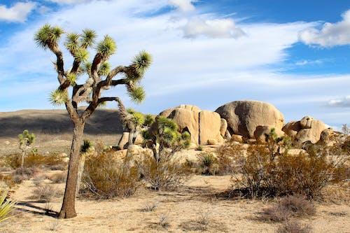 çöl, doğa, kayalar, manzara içeren Ücretsiz stok fotoğraf