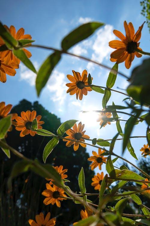 Free stock photo of beautiful, bloom, flora