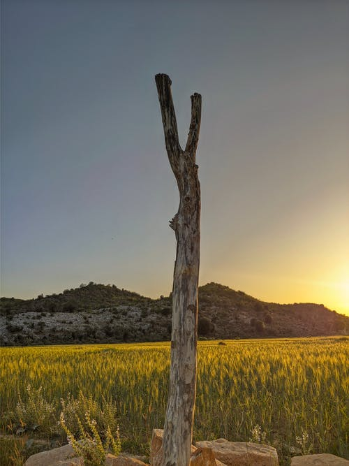 Free stock photo of grass, greenland, hills