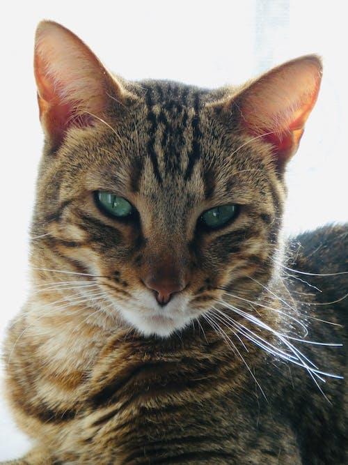 An Adorable Tabby Cat