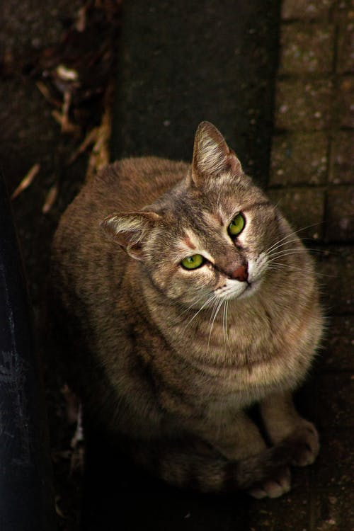 A Brown Cat Sitting on the Ground while Looking Up
