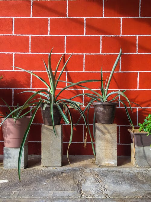 Potted Plants on Pedestals with a Red Brick Background
