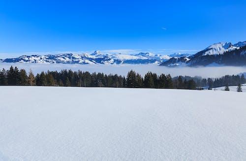 Kostenloses Stock Foto zu abhang, alpen, aussicht, bäume