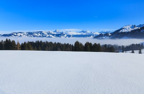 Fotos de stock gratuitas de Alpes, Alpes suizos, arboles, cima