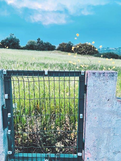 Free stock photo of blue sky, field, flowers