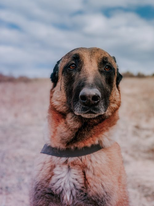 Adorable purebred dog with brown and black fur looking away under cloudy sky in daylight