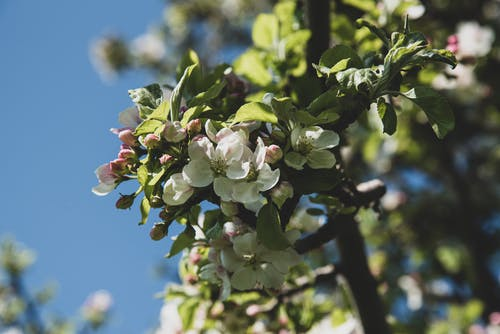 Free stock photo of blossom, botanic garden, flower