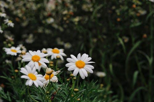 Безкоштовне стокове фото на тему «заводи, закри постріл, квіти»