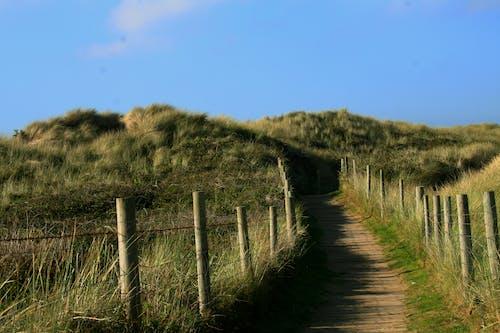 フィールド, フェンス, 丘, 小径の無料の写真素材