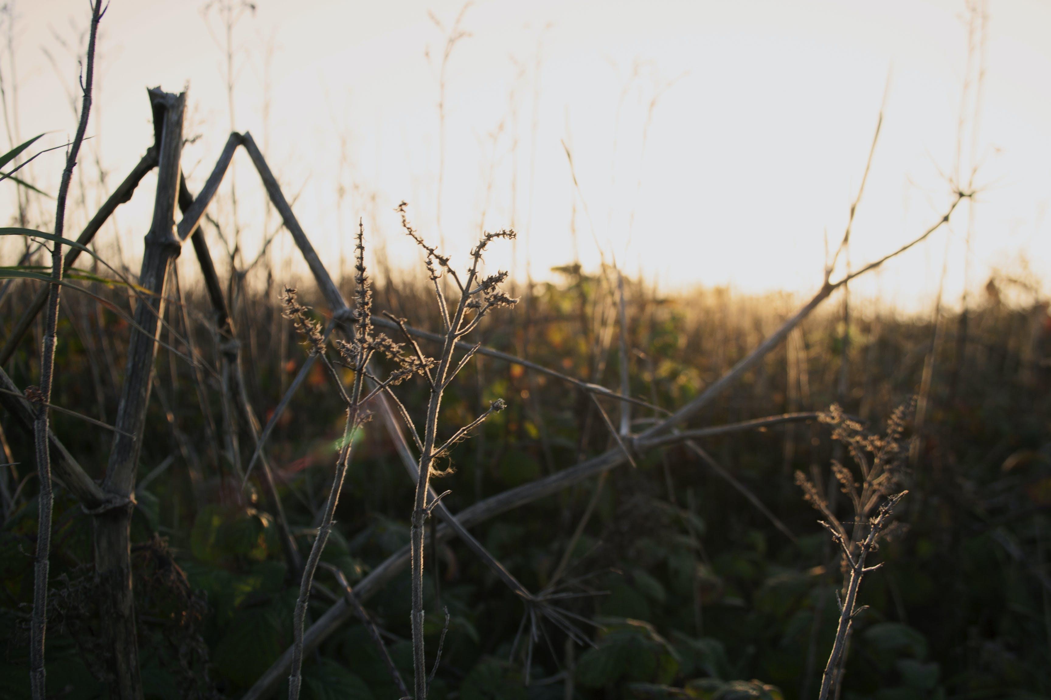 Kostnadsfri bild av bondgård, dimmig, fält, gräs