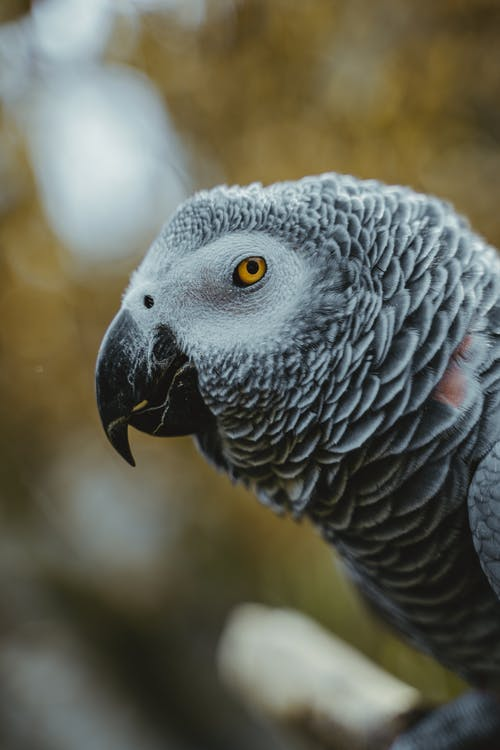 Grey and Black Bird in Close Up Photography