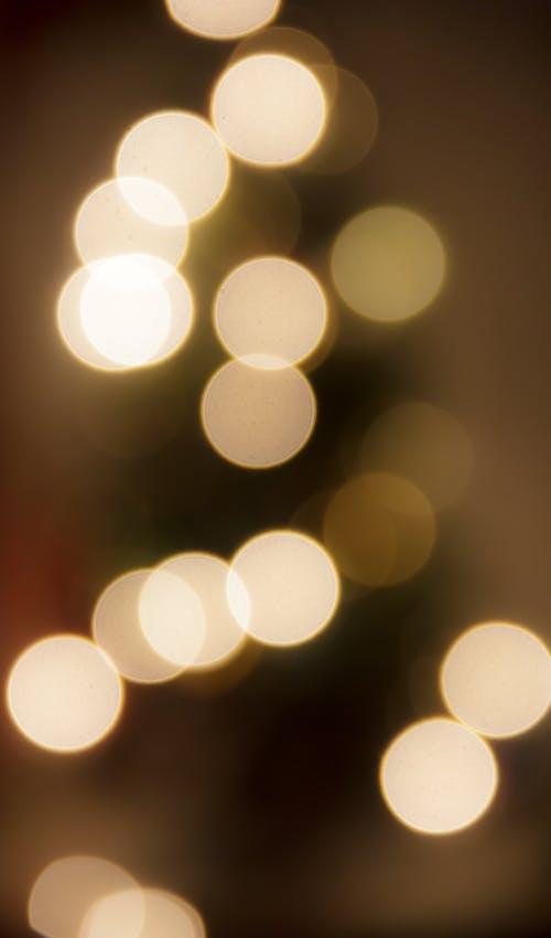 60d, difuminar, eos, lightroom中 的 免费素材照片