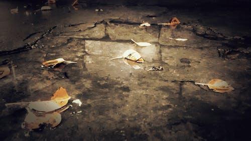 Immagine gratuita di foglie, vintage
