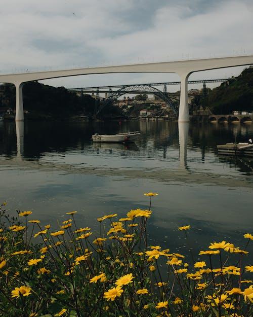 Fotos de stock gratuitas de agua, al aire libre, arquitectura