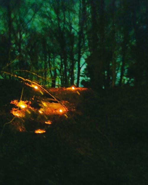 Kostenloses Stock Foto zu bäume in der nacht, bäume wald, kerzen