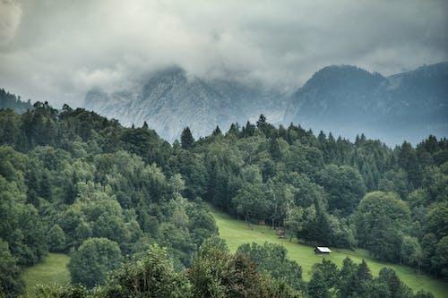 森林, 緑, 雲, 霧が多いの無料の写真素材