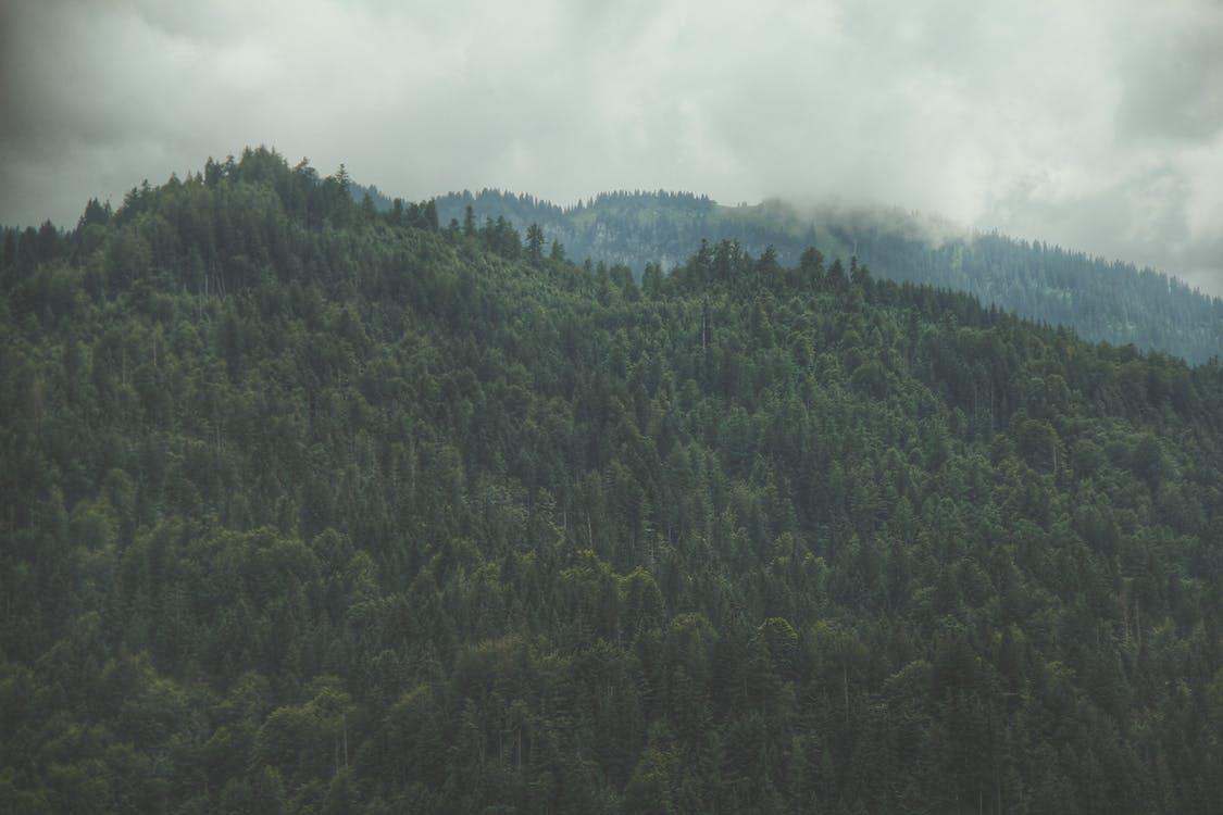 平和的, 曇り, 木