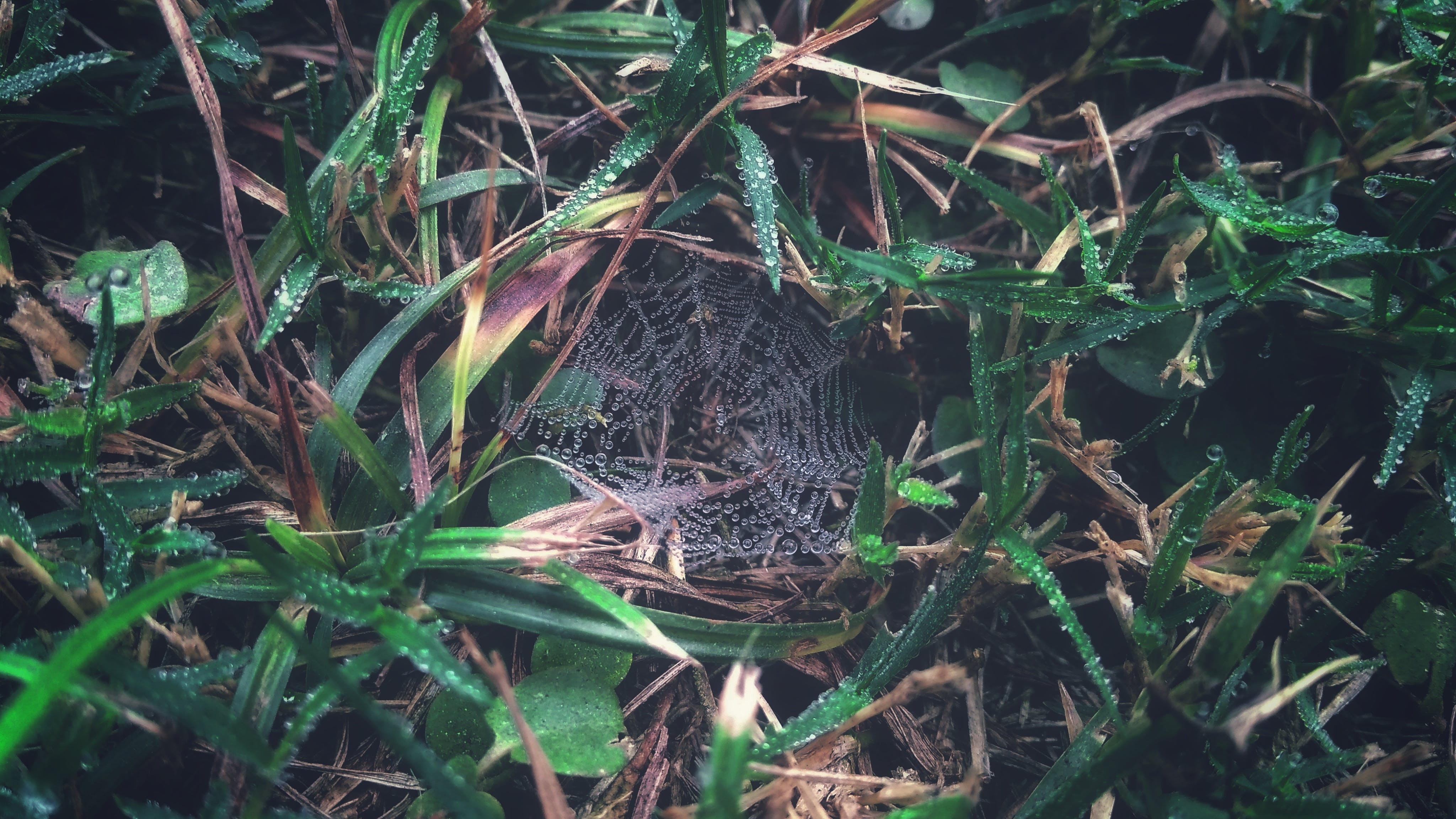 Spider Web on Grass With Dew Closeup Photography