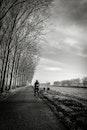 black-and-white, road, landscape