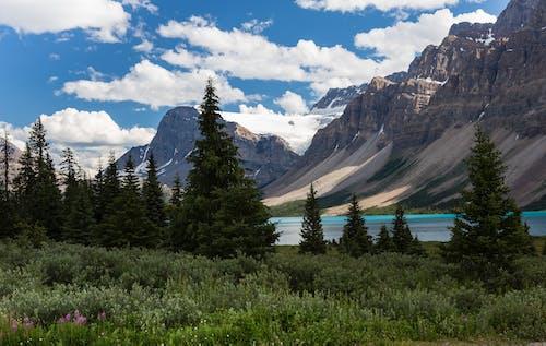 Gratis lagerfoto af bjerge, blade, græs, himmel