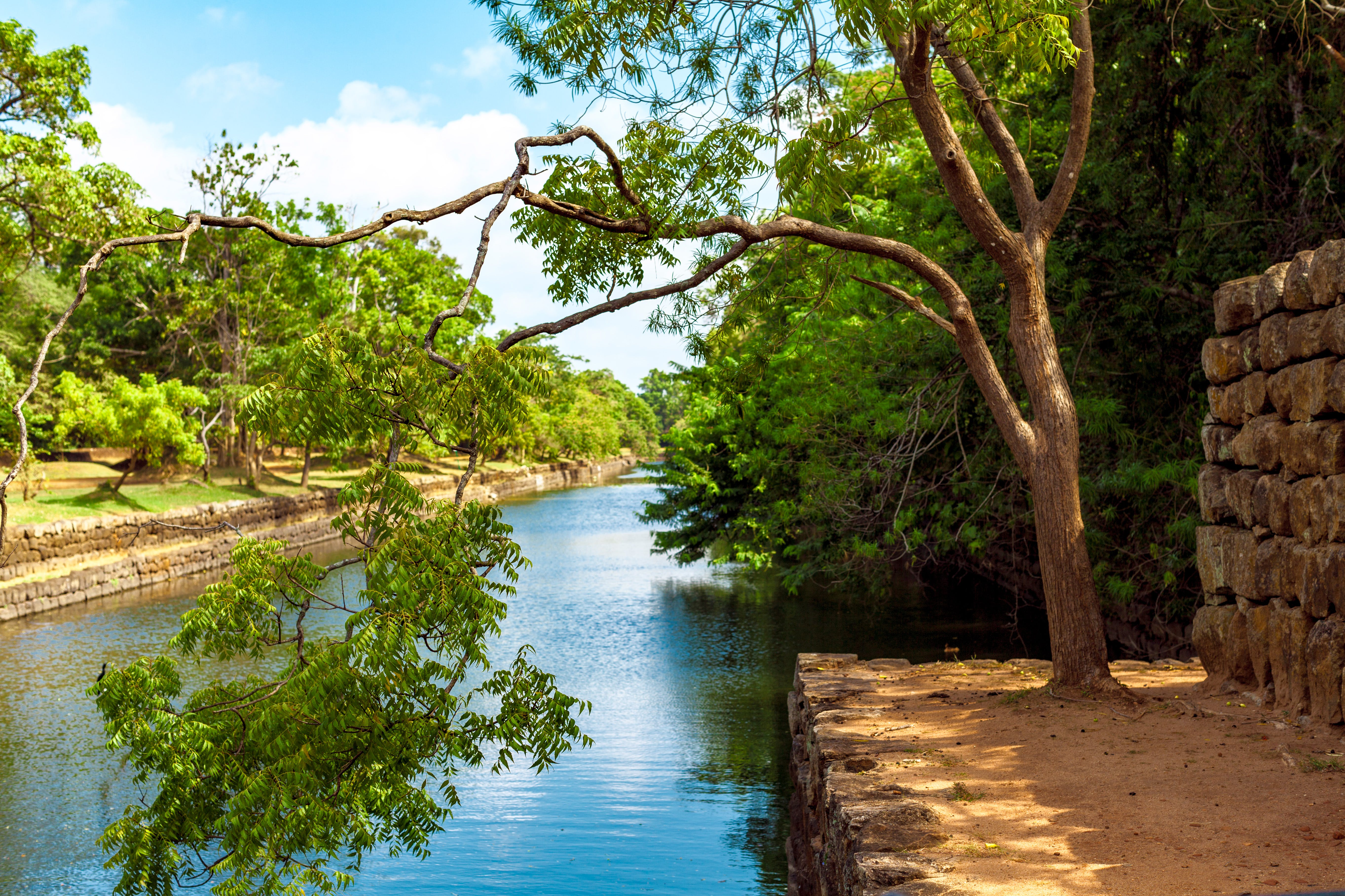 Photo of Green Leaf Tree Beside River
