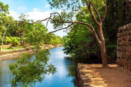 Ilmainen kuvapankkikuva tunnisteilla joki, kivet, lehdet, luonto