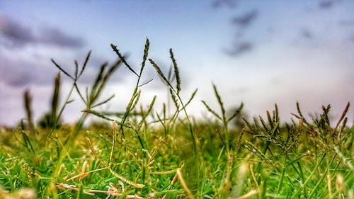 Základová fotografie zdarma na téma fotografie přírody, hřiště, mraky, ostření