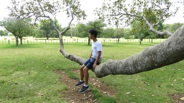 Free stock photo of nature, park, tree, fun
