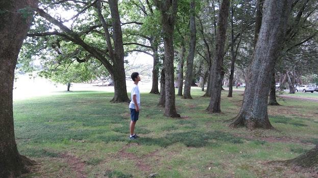 Free stock photo of nature, tree, boy, trip