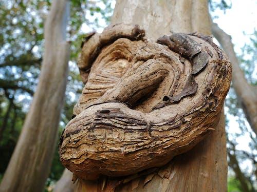 樹幹, 結, 绉紫薇 的 免费素材图片