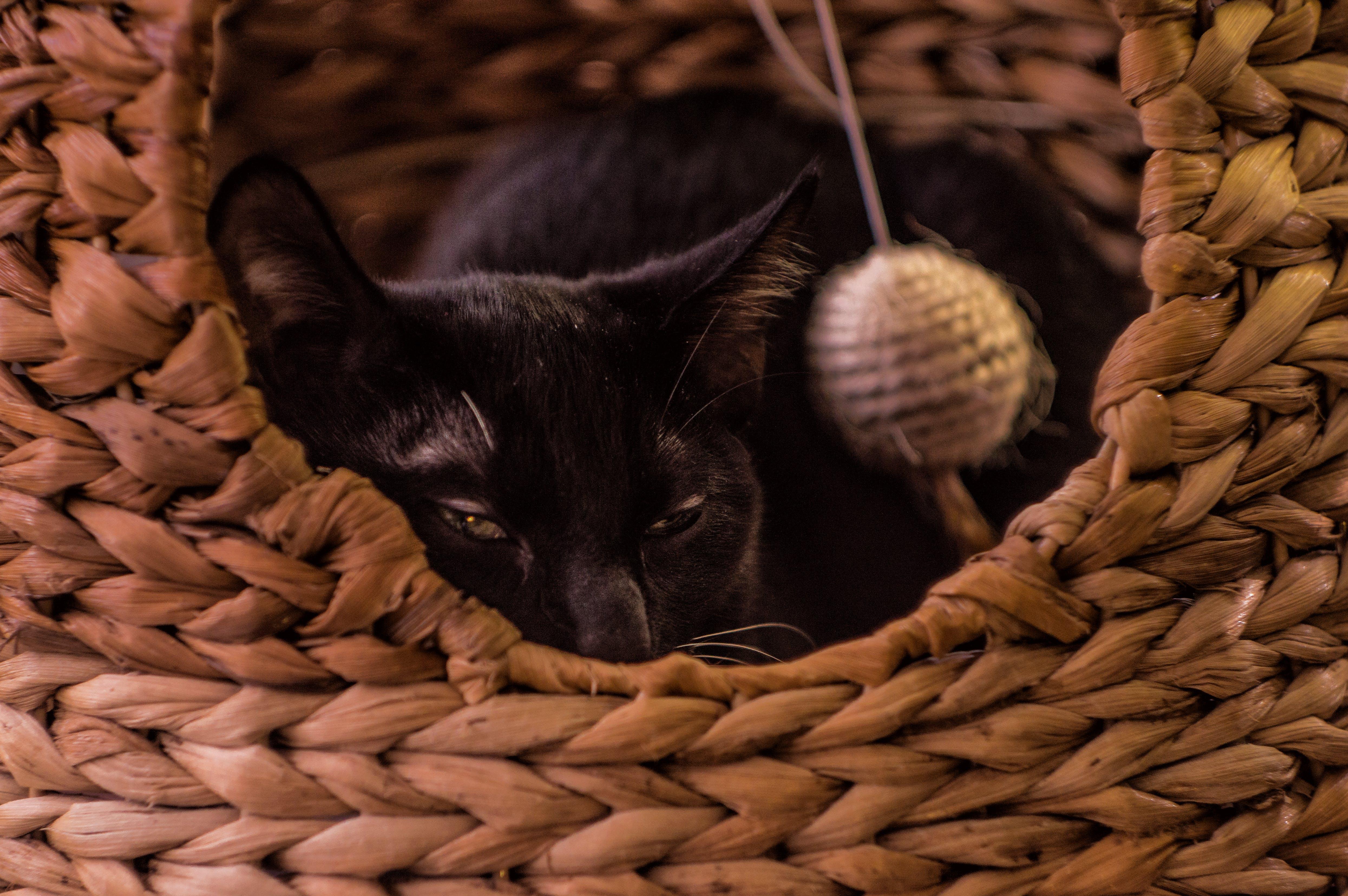Free stock photo of cat, sleep, evil