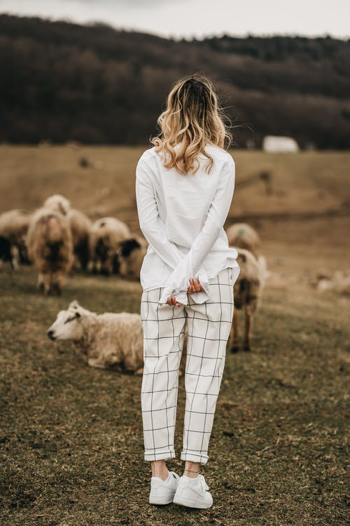 Unrecognizable stylish woman against sheep in countryside field
