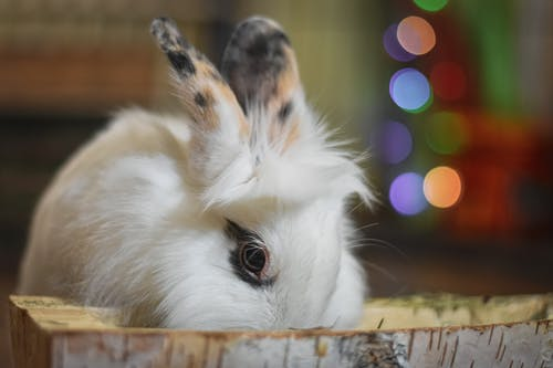 Close-up Photography of a Rabbit