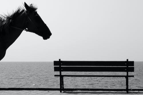 Horse on promenade near sea on sunny day