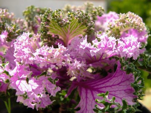 Free stock photo of beautiful flowers, beautiful nature, flower