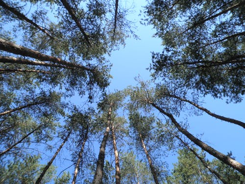 Low-Angle Shot of Trees in the Forest