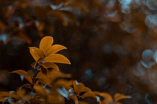 Free stock photo of autumn leaves, fall, focus