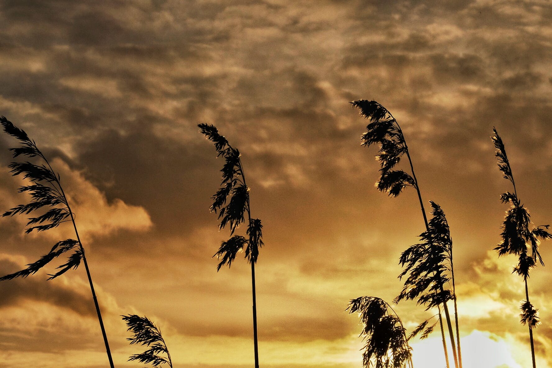 Free stock photo of nature, sky, sunset, clouds