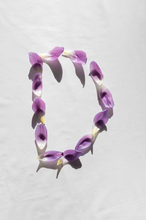 An Alphabet Made of Purple Flower Petals