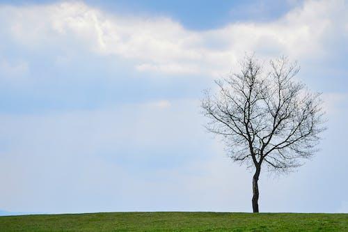 A Leafless Tree on a Grassy Field