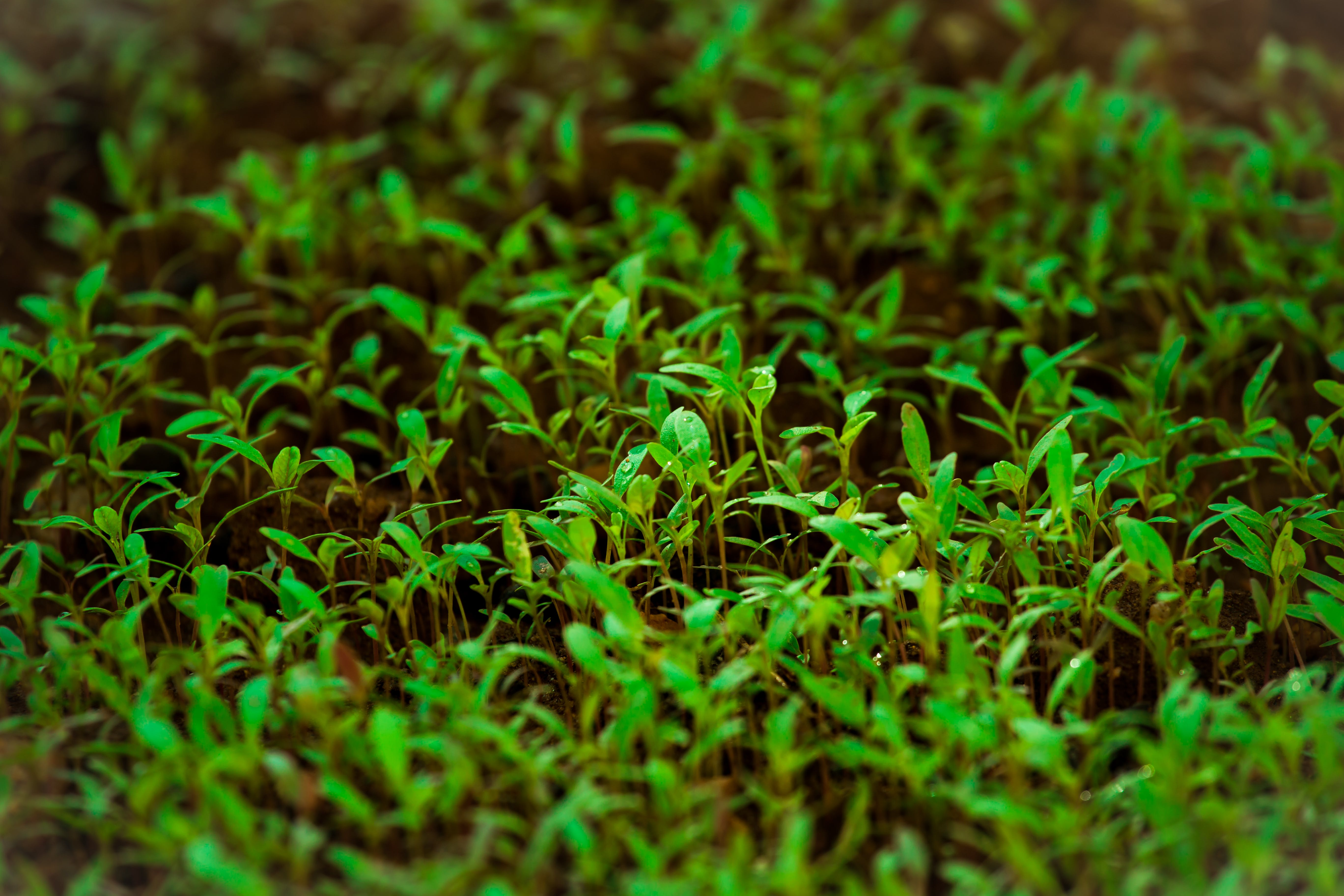 Green Grass in Tilt Shift Lens Photography