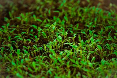 Immagine gratuita di ambiente, biologia, colori, crescere