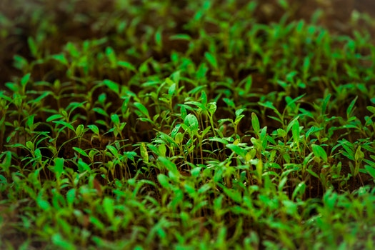 Green Grass in Tilt Shift Lens Photography