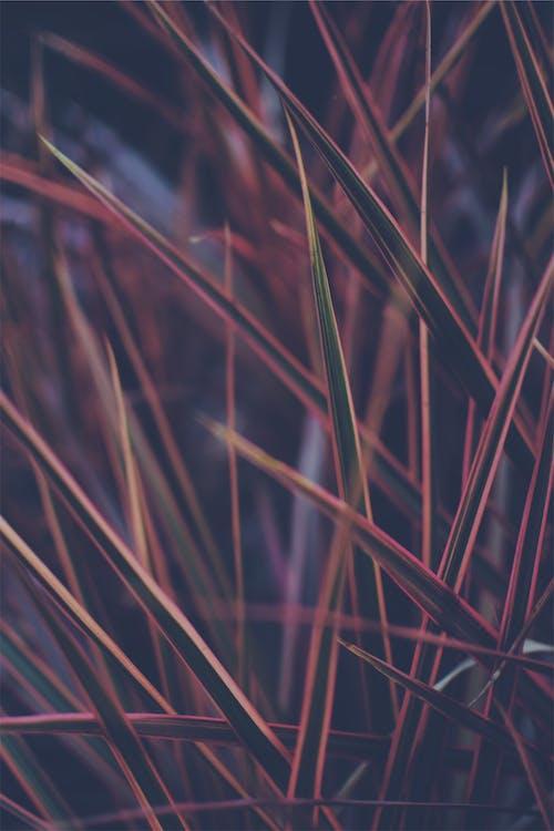 Foto d'estoc gratuïta de color, corba, corbar, desenfocament