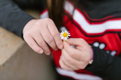 A Person Holding a Daisy Flower