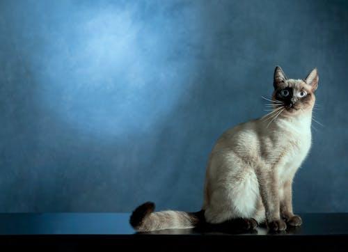 Foto profissional grátis de adorável, animal, animal de estimação