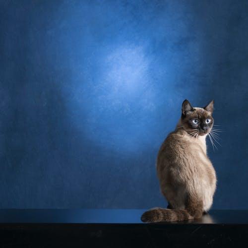Ảnh lưu trữ miễn phí về chụp ảnh động vật, con vật, đáng yêu
