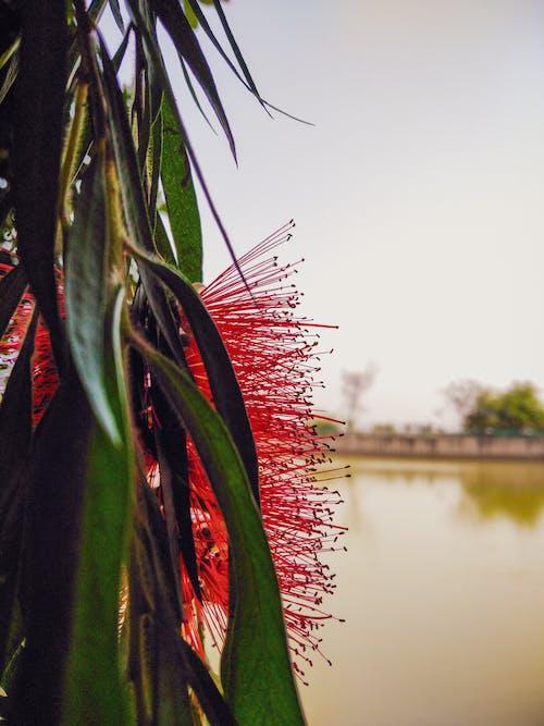 Free stock photo of flowers, lake, nature photography