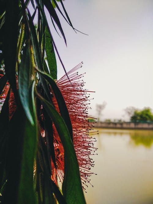 Free stock photo of beautiful landscape, flower, lake