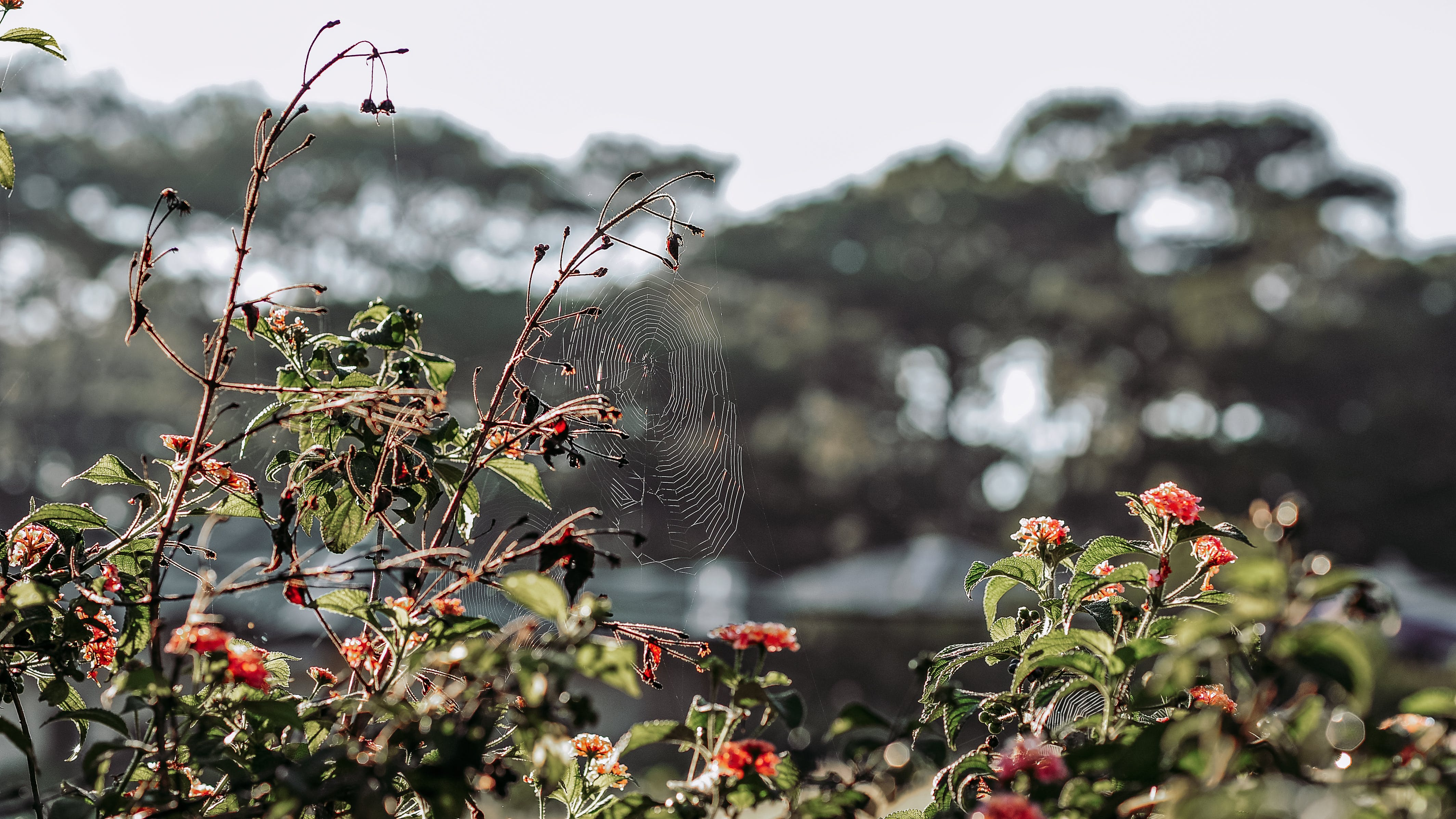 Selective Focus of Spider-web on Green Leaf Plant